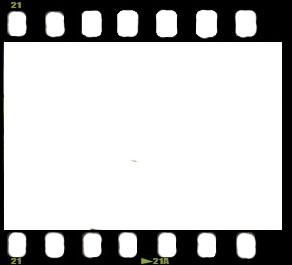 63mqqpxbc3rgkk7ucr8w گلبرگ سرخ طراحی دانلود طرح لایه باز نگاتیو شماره یکم