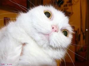 surprised shocked animals funny 30  700 300x225 طنز زن هم زنای قدیم