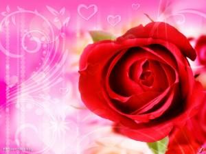 dddddff 300x225 فروش میکس کارت گل رُز سرخ