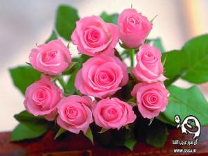 gsga 5 300x225 عیدی سایت گل سرخ غریب آشنا به مناسبت سال جدید