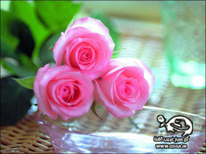 gsga 6 300x225 عیدی سایت گل سرخ غریب آشنا به مناسبت سال جدید