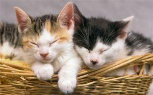 1017 300x187 چیزهای جورواجوری که درباره گربهها نمیدانستید